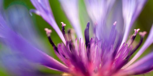 Twitter Header - Flowers - Purple Flowers - Hipi.info ...