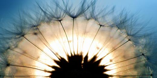 Twitter Header - Flowers - Light Flowers - Hipi.info ...